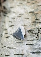 Heart shaped stone on bark background