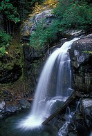 Waterfall in a forest, Cedar Falls, Okanogan National Forest, Washington, USA