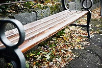 A bench in Reykjavik in autumn, Iceland