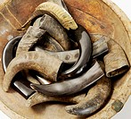 Buffalo horns in wooden bowl, close-up