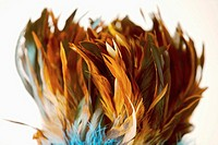 Bunch of plumes, close-up