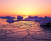 Ice Floes In The Ocean