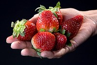 Close-up of strawberries on a person's hand