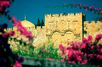 Flower plants in front of a wall, The Golden Gate, Jerusalem, Israel