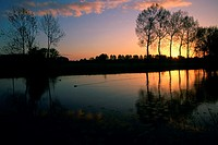 Silhouette of trees at sunrise, River Vecht, Netherlands