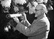 italia, liguria, sanremo, misurazione della temperatura dei fiori, 1949