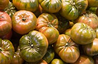 large group of green tomatoes, close-up