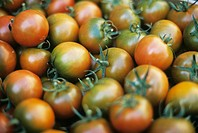 Unripe tomatoes, close-up