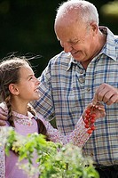 Grandfather and granddaughter 8-10 picking cherry tomatoes in vegetable garden, smiling, side view