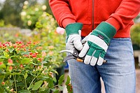 Man wearing gardening gloves, pruning flowers in garden, using secateurs, close-up, mid-section