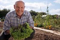 Senior man in checked shirt holding fresh leaf vegetable in garden, crouching, smiling, portrait
