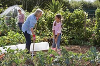 Girl 9-11 and grandmother digging in garden, smiling, mother standing beside greenhouse, watching