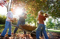 Family collecting autumn leaves in wheelbarrow in garden, low angle view tilt, lens flare