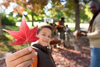 Multi-generational family collecting autumn leaves in garden, focus on boy 7-9 holding red maple leaf in foreground