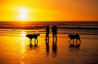 Couple Walking their Dogs at Sunset on the Beach