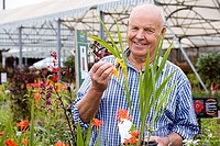 Senior man shopping in garden centre, holding yellow flower, smiling, portrait