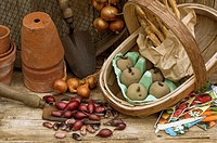 Rustic potting shed still life with garden tools, onion sets , shallots, runner bean and potato seed