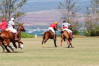 Hawaii, Oahu, North Shore, men on horseback playing polo on oceanside fields  NO MODEL RELEASE