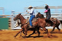 Hawaii, Molokai, Molokai Rodeo, Two paniolos roping calf, Blurred action