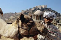 India, Rajasthan, near Kumbhalgarh, local man with camel  NO MODEL RELEASE