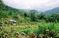 Costa Rica, farm in the mountains