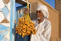 Sudan, Eastern Sahara, Soleib, fresh dates