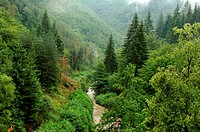 Bulgaria, Rhodope Mountains Region, river