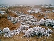 Freezing winter at Las Bardenas Reales natural park. Navarra province. Spain