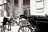 Horses and carriages on European street