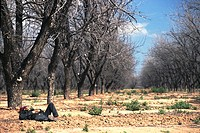 Man lying on ground, asleep in grove of trees'