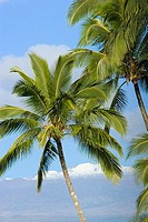 Hawaii, Palm trees with snowcapped mountain in the background (thumbnail)