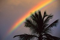 Top of one palm tree with vibrant rainbow arching over it through cloudy gray sky