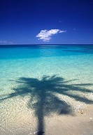 Palm tree shadow cast onto turquoise water of a beautiful tropical lagoon