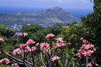 A pink plumeria tree in the foreground of a beautiful landscape of Diamond Head from high above