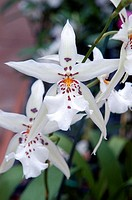 Close-up of a beautiful white orchid