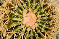 Close-up of spiny cactus needles (thumbnail)