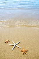 Three seastars on sand with ocean washing in
