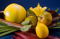 Studio shot of a variety of citrus fruit (thumbnail)