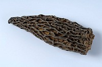 Morel, dried, Morchella, conica,