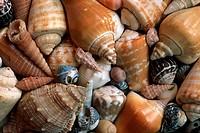 Snail, shells,