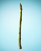 Single asparagus spear