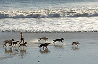 Woman running on beach with dogs
