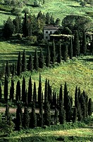 High angle view of trees on a landscape, Orvieto, Umbria, Italy