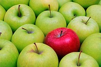 apple, apples, apples, red, green, contrast, exception, striking, fruits, food, eatings, food, fruit, symbol