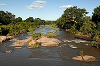 River flowing through a forest, Sabie River, Kruger Park, South Africa