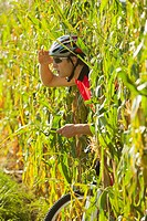 A cyclist coming out of a cornfield and using his mobile phone