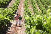 Couple Walking in Grape Field