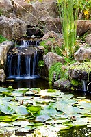Pond with Waterfall and Lily Pads
