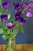 Violet flowers in a vase