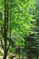 Green Trees, Gambier Island, B C